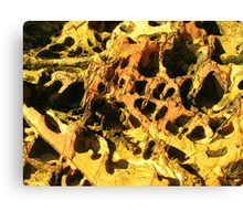 Honeycomb - Mossy Point, New South Wales  Canvas Print
