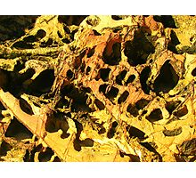 Honeycomb - Mossy Point, New South Wales  Photographic Print