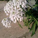 Pretty Flowers  by Ruby Adams