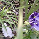 Purple/Blue  by Ruby Adams