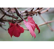 natures colour wheel Photographic Print