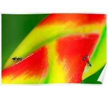 Heliconiun and Ants Poster