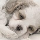 Tuckered out! by Samantha Cole-Surjan