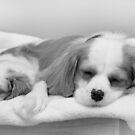 Best Friends by Samantha Cole-Surjan