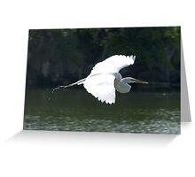 Great White Heron in flight Greeting Card
