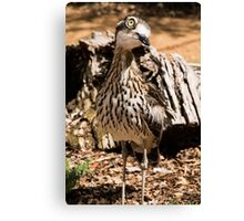 Curlew at Healesville Sanctuary Canvas Print