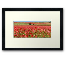 Field of red Framed Print