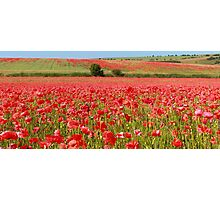 Field of red Photographic Print