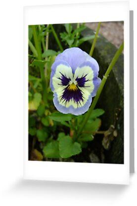 That's One Grumpy Flower! by armadillozenith