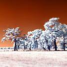 Trees ~ Infrared HDR 'Tilt-shift' Panorama by Pene Stevens