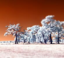 Trees ~ Infrared HDR 'Tilt-shift' Panorama by Pene Stevens