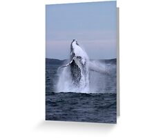 twilight humpback Greeting Card