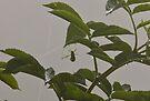 New grasshopper 1 by David Clarke