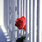 Life behind the bars by sonjas