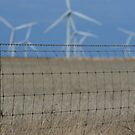 Wattle Point Wind Farm by Darryl Leach