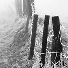 Frosty Fence in Fog by dlsmith