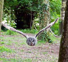 "Grey Owl ""Incoming"" by Paulie-W"