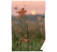 Wood Lily At Sunset Poster