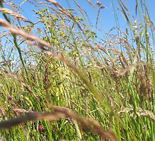 More Grass (Scarborough Castle june 2009) by fatchickengirl