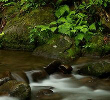 Anthony Creek by Deb Campbell