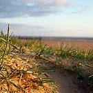 Dunes by KathO
