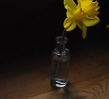 The Only Daffodil by goddarb