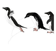 Birds - Illustration - Adelie penguins jumping  Photographic Print