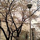 street post by Aimerz