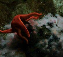 Star by Lita Medinger