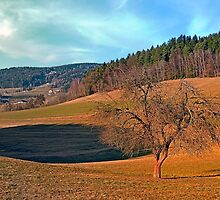 Lonely tree in springtime scenery | landscape photography by Patrick Jobst