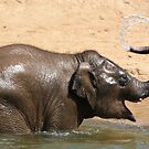 Bath Time @ Dublin Zoo by Martina Fagan