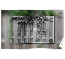 Fence with Ivy Poster