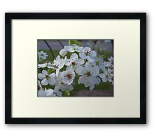 Blossoms Framed Print