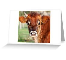 Little Horn Greeting Card