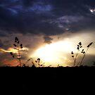 Last Light by Jennifer Potter