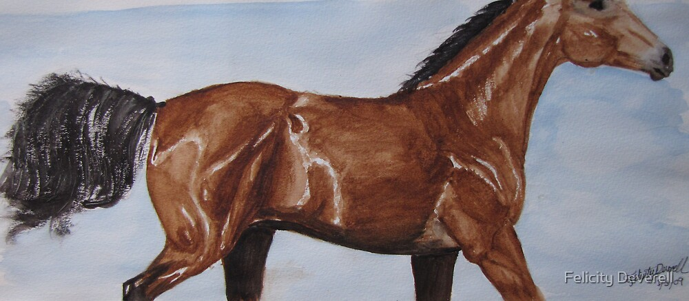 Bay Horse by Felicity Deverell