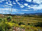 High Desert Oasis by Vicki Pelham