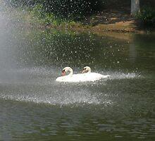 swan lake  by Jonathan  Green