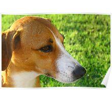 Stray Dog Poster