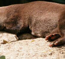 Water Otter, Canberra Zoo, Australia. Sticker