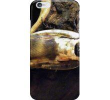 Death's Head Cockroach iPhone Case/Skin