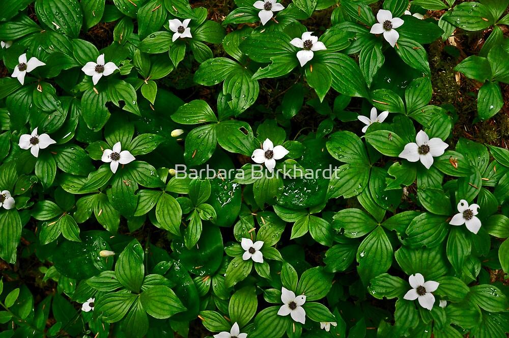 Floral Carpet - Wild Flowers by Barbara Burkhardt