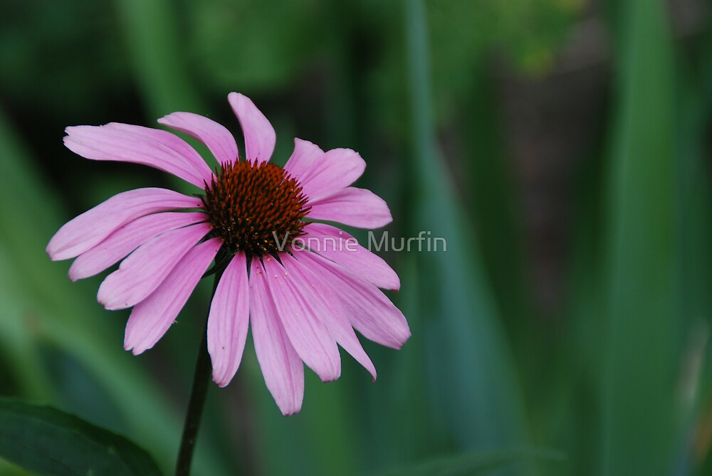 Purple Flower by Vonnie Murfin
