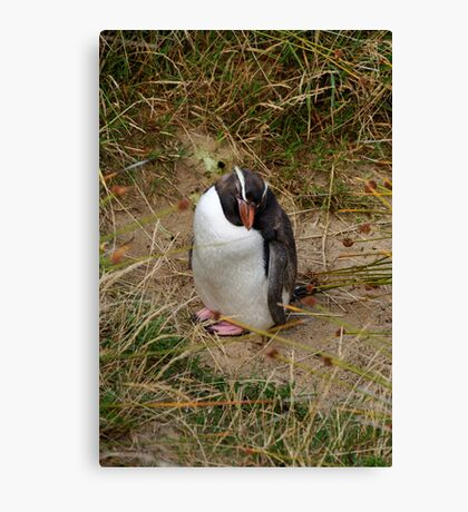 Fiordland Penguin ? Canvas Print