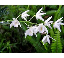 Native Orchids with Raindrops Photographic Print