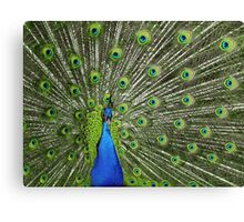 Peacock wide Canvas Print