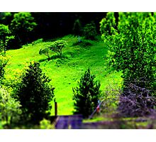 Hillside. Photographic Print