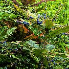 Garden Colours at Lyme Dorset uk by lynn carter