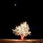 Chatfield Xmas 18 by greg1701