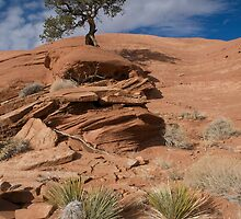 Lonely Tree by Chris Parker